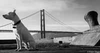 SanFranciscoBridges#11